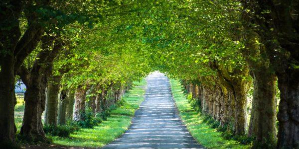 ヨーロッパ写真日和VOL.226『土曜日はボプラの並木道。チームご近所と初ランドネへ』