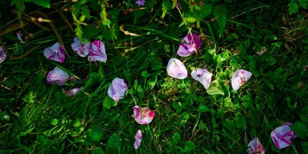 ヨーロッパ写真日和VOL.77『フランスの秘密の庭へ』