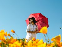 晴雨兼用の日傘と雨傘の違いを知って賢く使おう